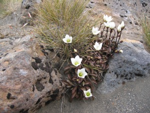 Flowers growing between the rocks